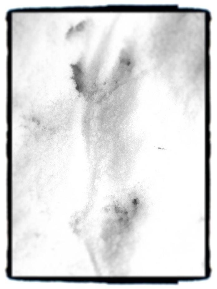 jälkiä uudessa lumessa