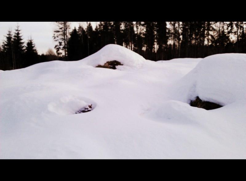 hakkuuaukean talvea