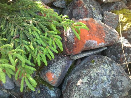 kiviaitaa kuusen alla