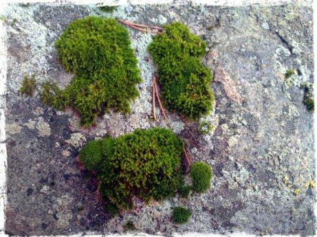 Luonnon tekemää sammalgraffittia