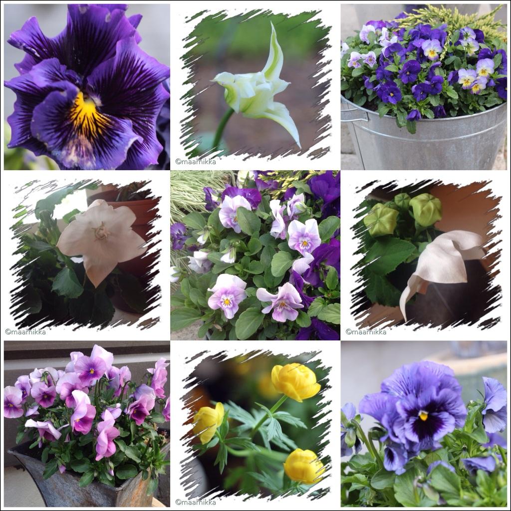 Kollaasi keväisistä kukista